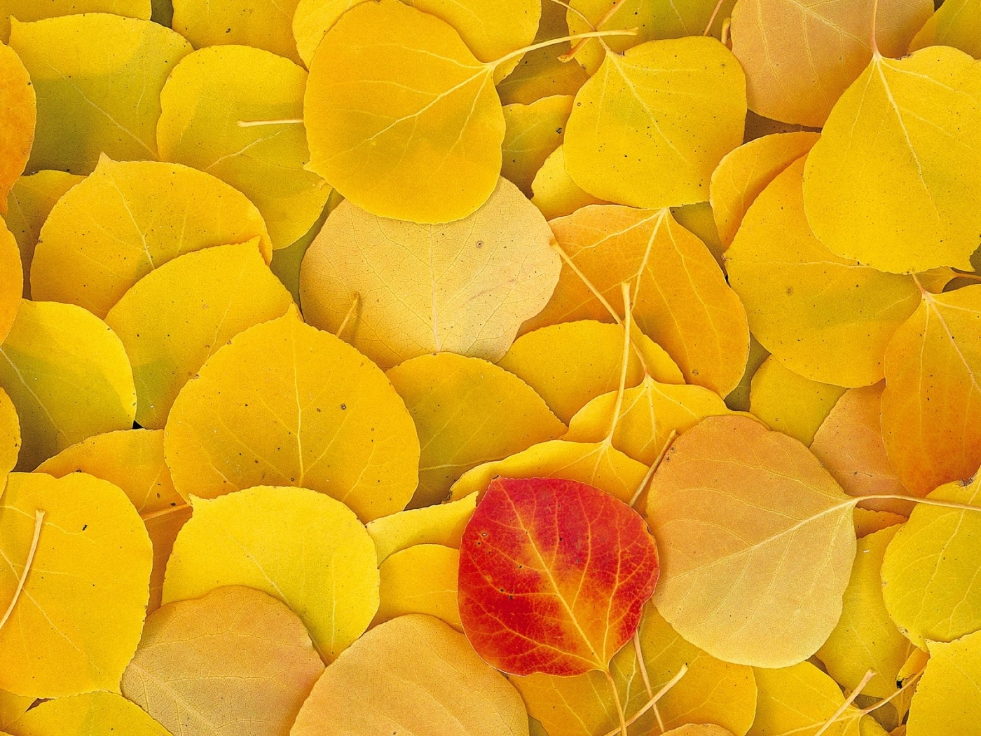 41367 download wallpaper Background, Autumn, Leaves screensavers and pictures for free