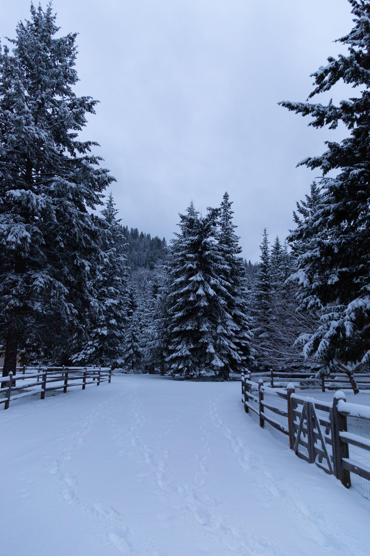 95910 скачать обои Деревья, Снег, Забор, Зима, Природа, Елки - заставки и картинки бесплатно