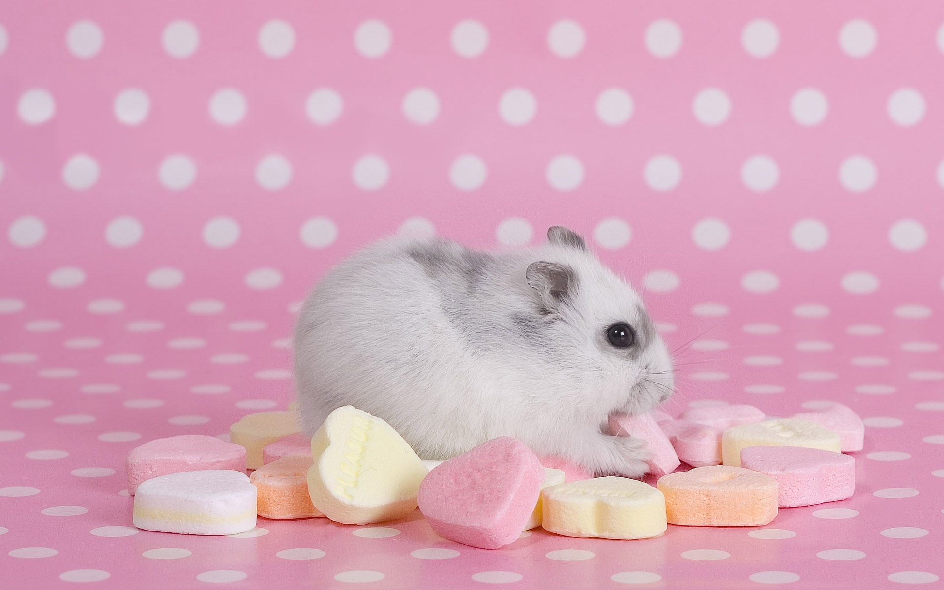 39826 Screensavers and Wallpapers Rodents for phone. Download Animals, Rodents pictures for free