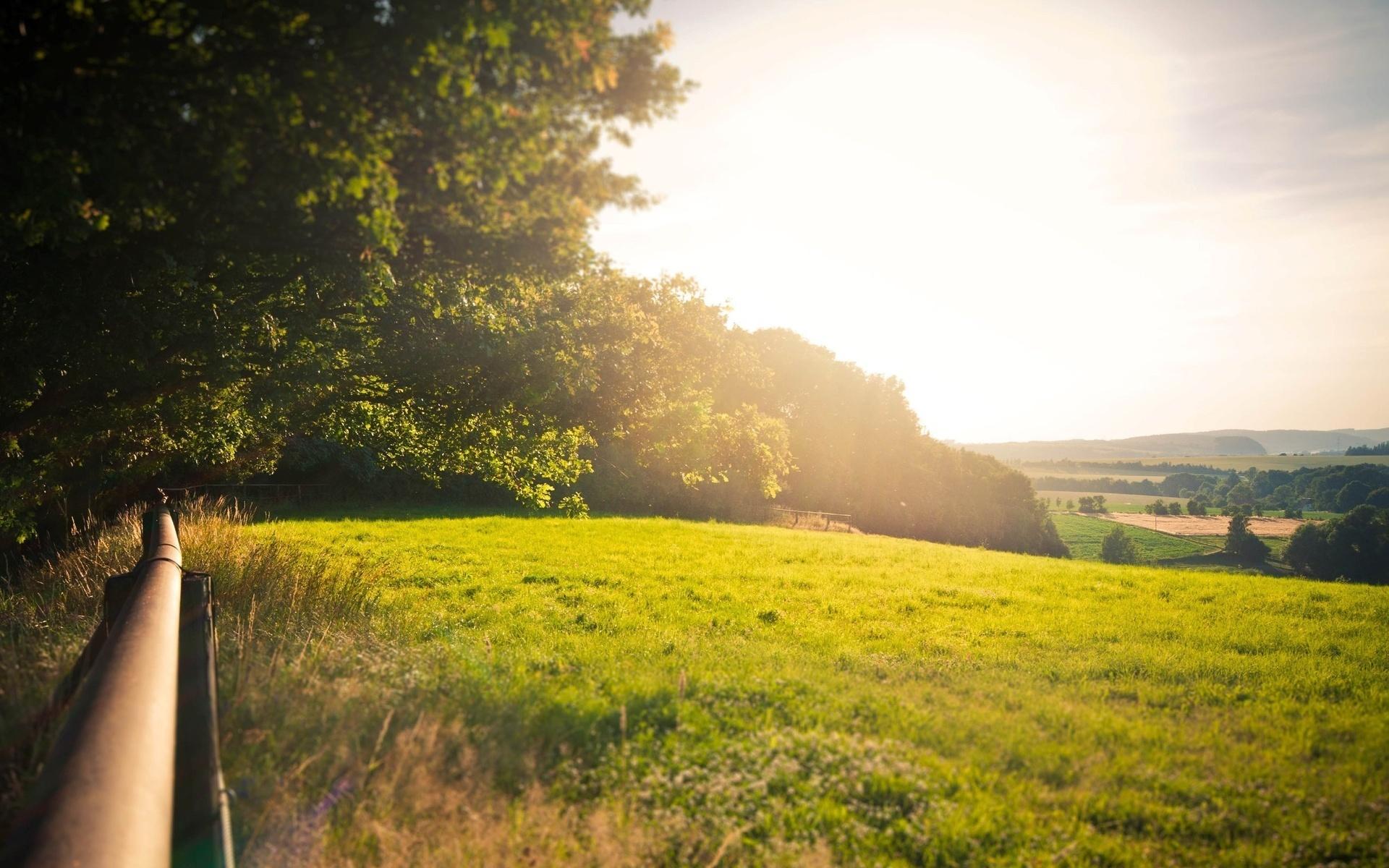 25904 скачать обои Пейзаж, Деревья, Поля, Солнце - заставки и картинки бесплатно