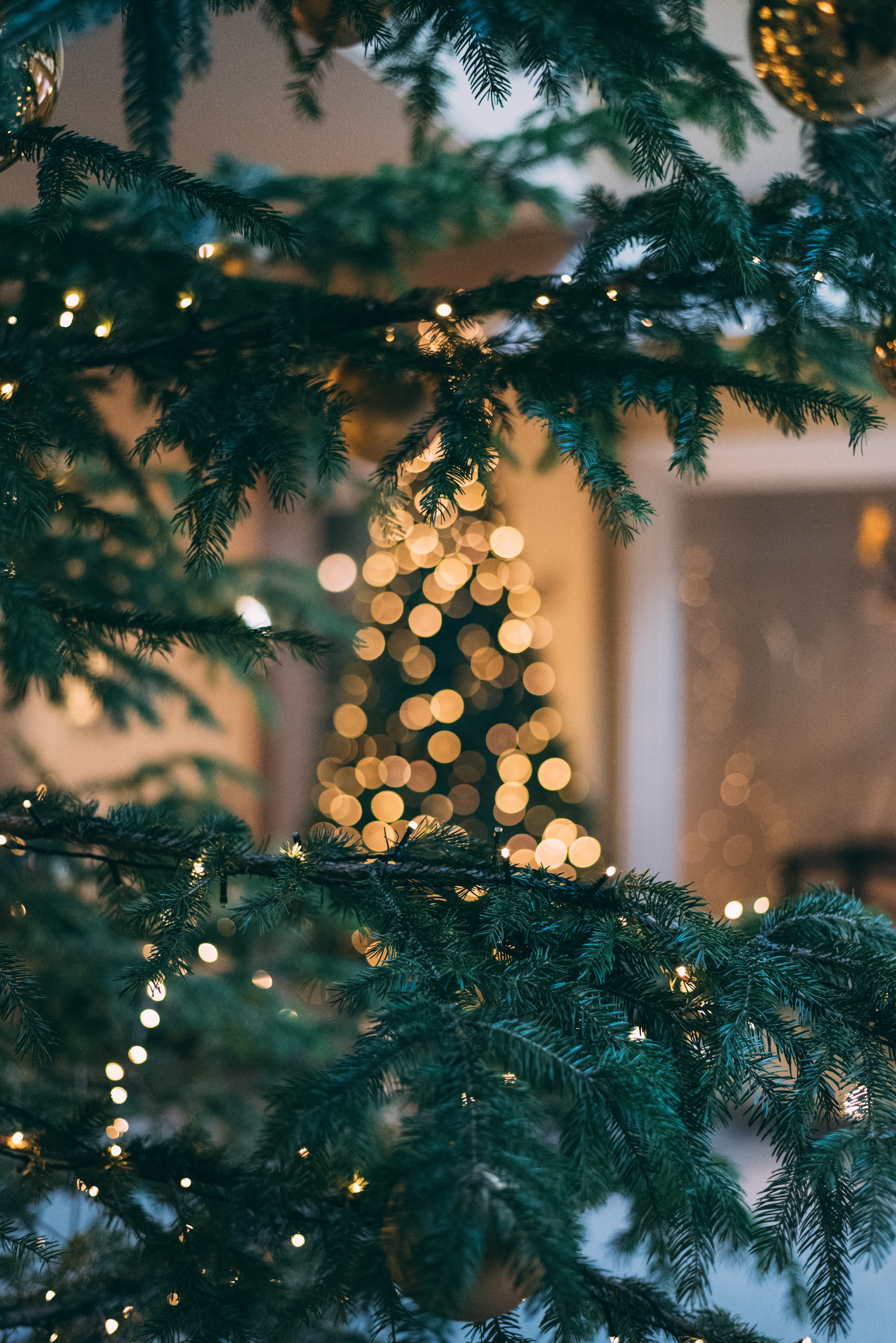117189 Screensavers and Wallpapers Spruce for phone. Download Holidays, New Year, Glare, Christmas, Branch, Spruce, Fir, Christmas Tree, Bokeh, Boquet pictures for free