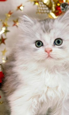9921 download wallpaper Animals, Cats screensavers and pictures for free