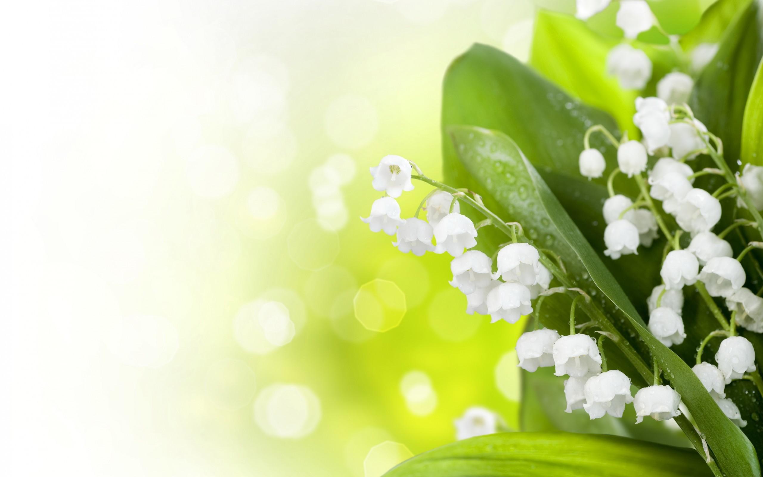 29667 fond d'écran 320x480 sur votre téléphone gratuitement, téléchargez des images Plantes, Fleurs, Muguet 320x480 sur votre mobile