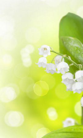 29667 descargar fondo de pantalla Plantas, Flores, Lirios Del Valle: protectores de pantalla e imágenes gratis