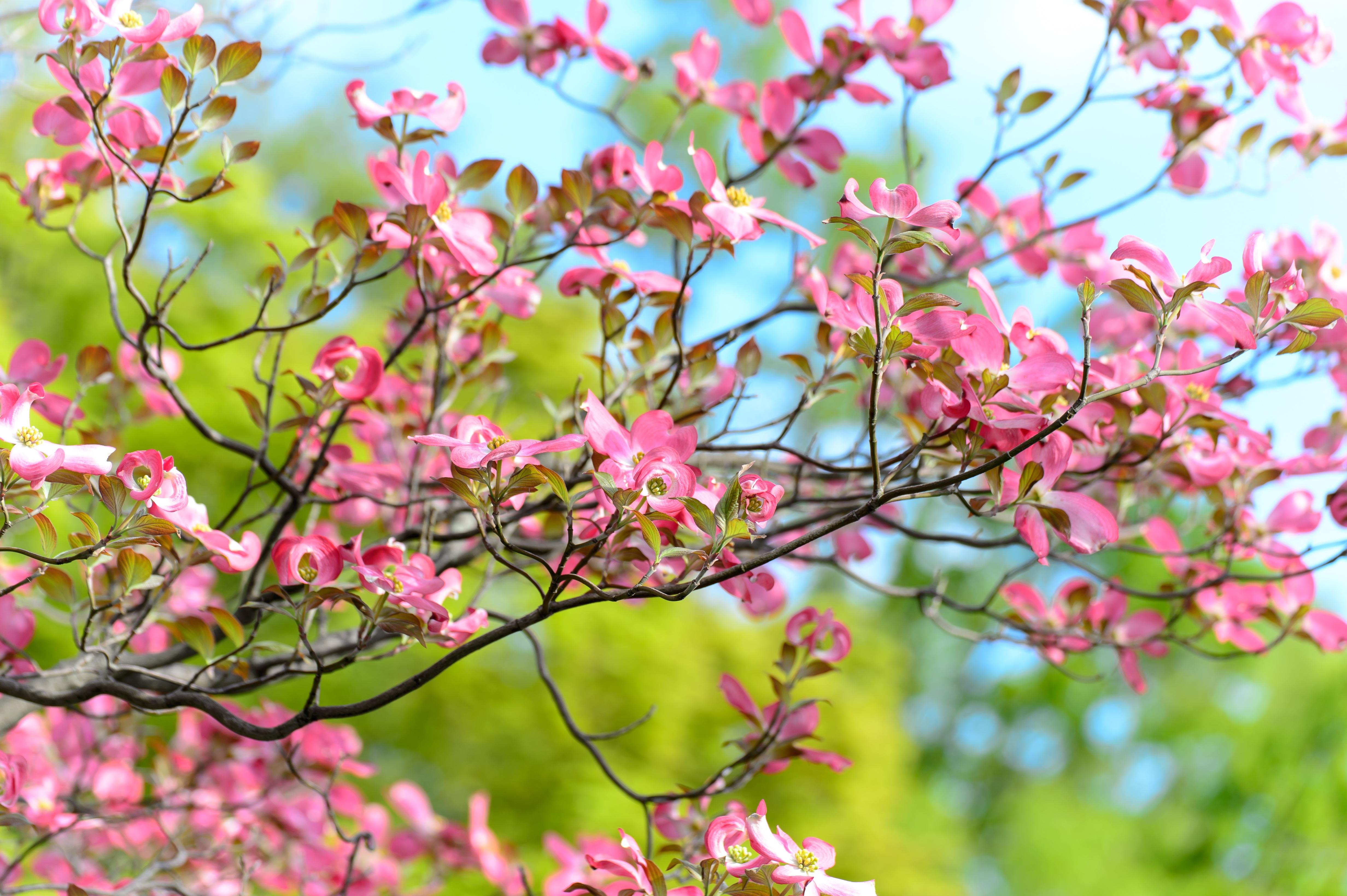 66188 Salvapantallas y fondos de pantalla Flores en tu teléfono. Descarga imágenes de Flores, Madera, Árbol, Florecer, Floración, Rama gratis