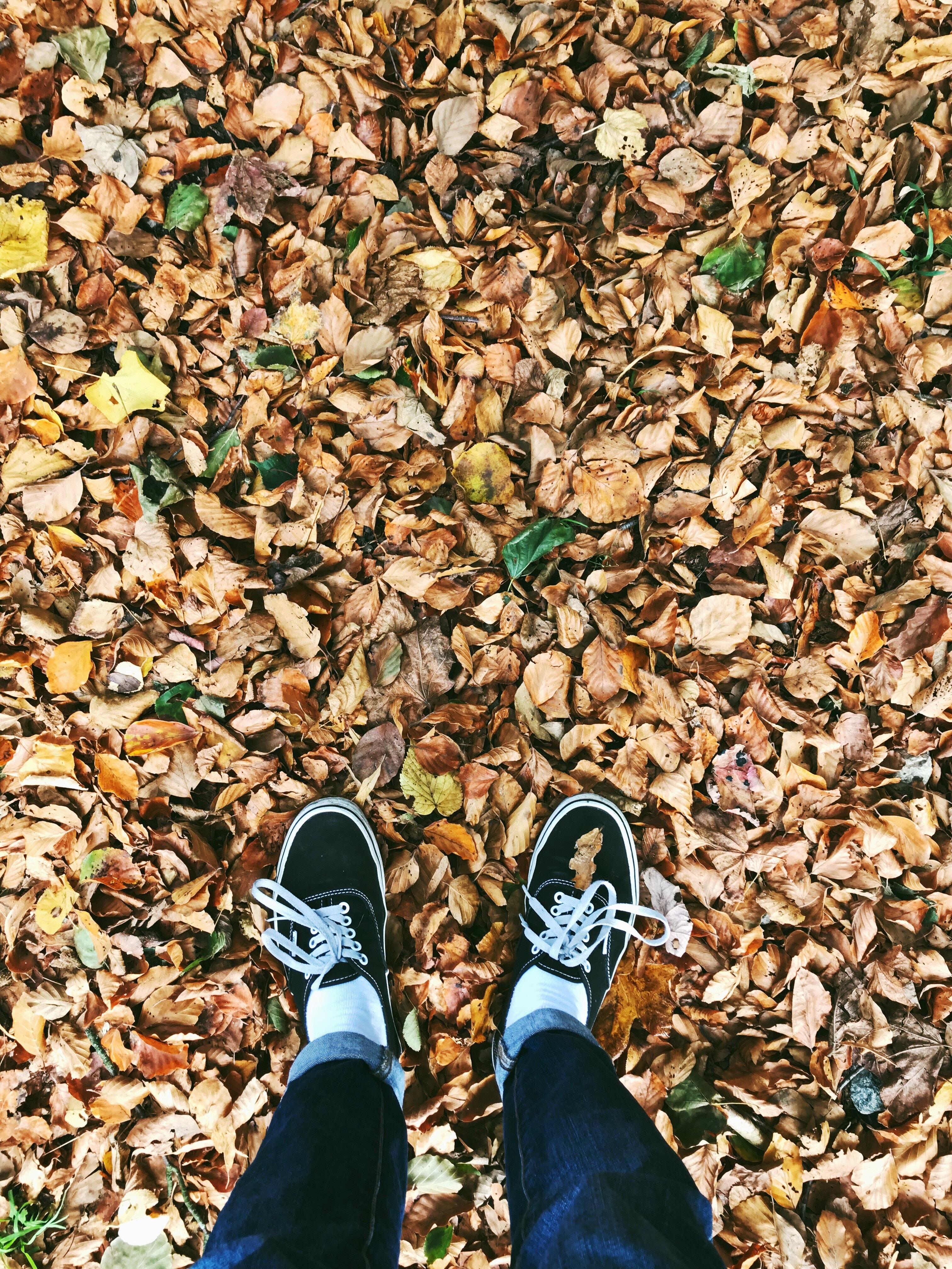 66604 скачать обои Разное, Осень, Ноги, Листва, Опавший - заставки и картинки бесплатно