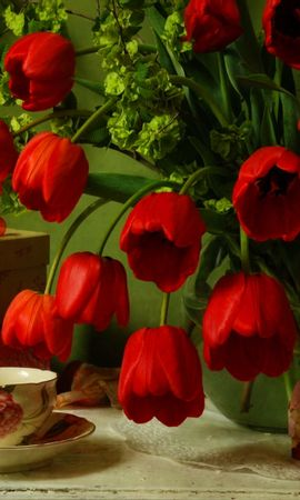 42216 скачать обои Растения, Цветы, Тюльпаны - заставки и картинки бесплатно