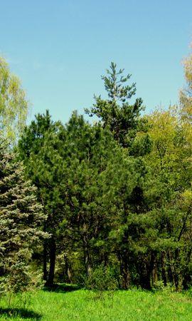 5837 скачать обои Растения, Пейзаж, Деревья - заставки и картинки бесплатно