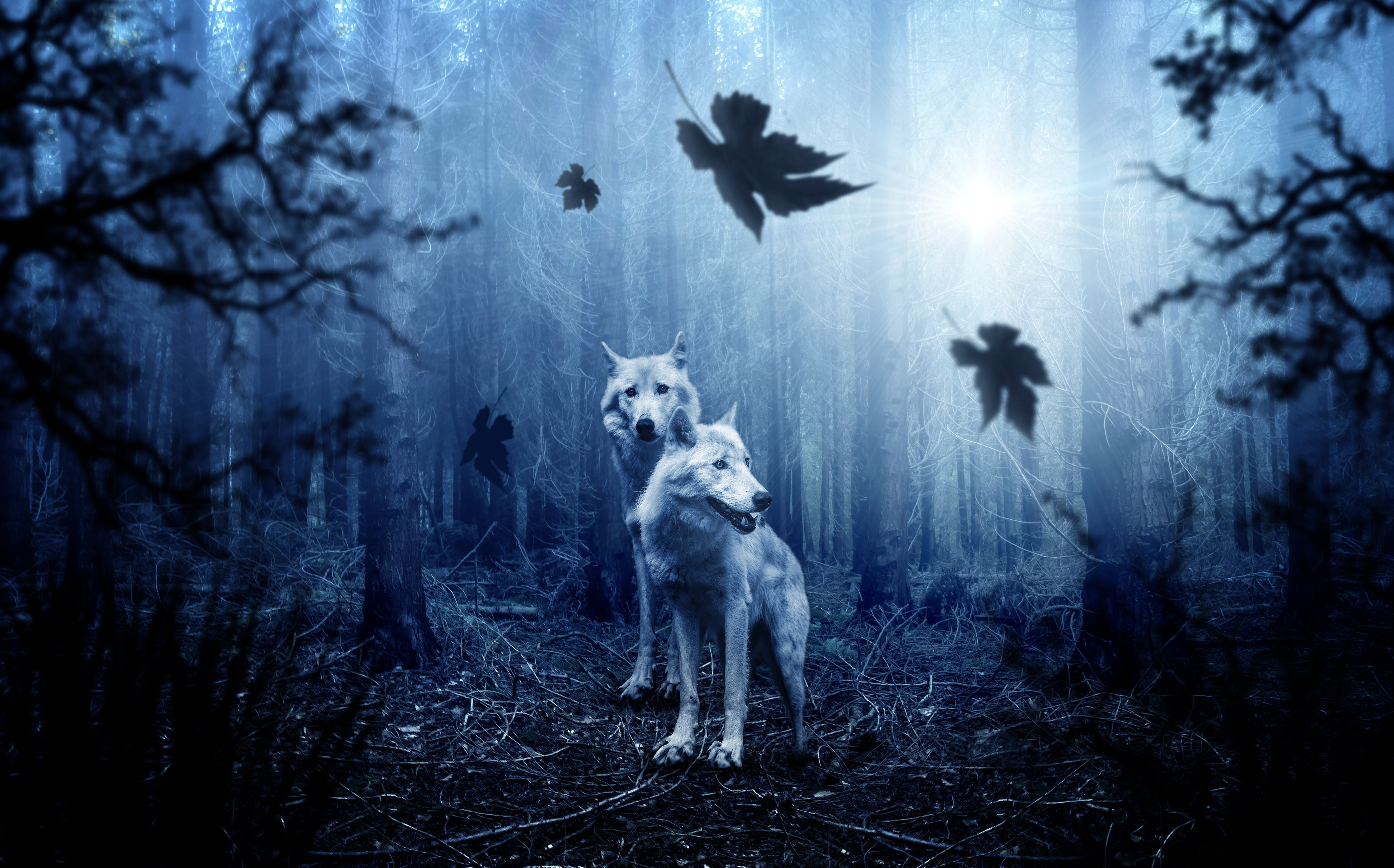 123432 download wallpaper Animals, Wolfs, Predators, Forest, Photoshop screensavers and pictures for free