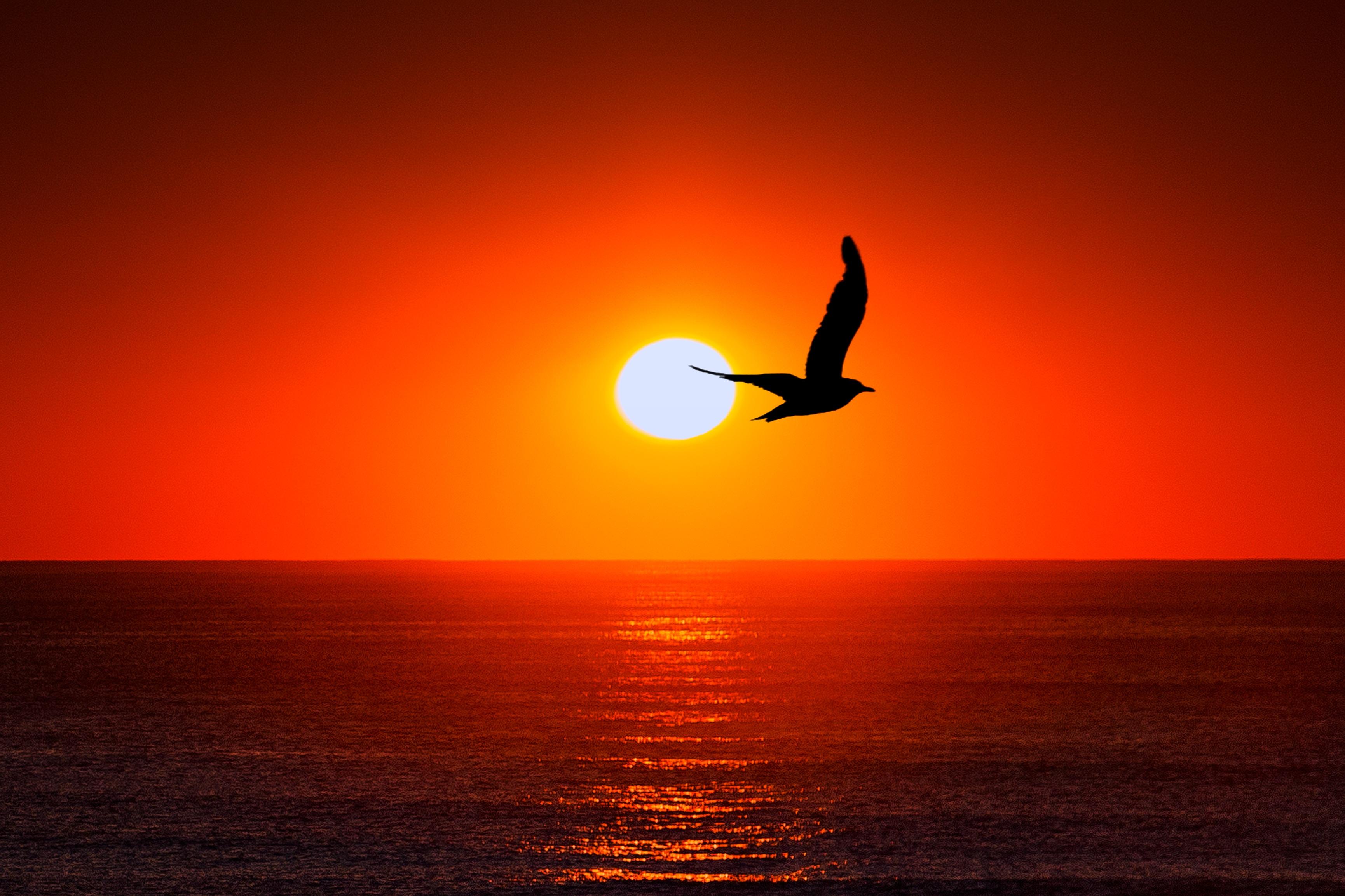 61220 скачать обои Животные, Небо, Солнце, Море, Птица, Силуэт - заставки и картинки бесплатно