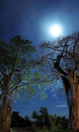 30781 скачать обои Пейзаж, Деревья, Ночь - заставки и картинки бесплатно