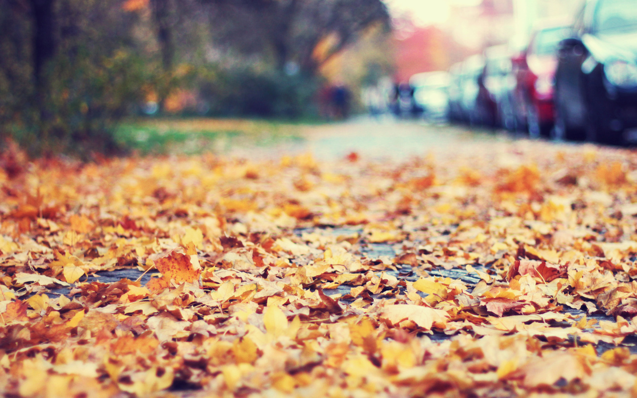 32395 download wallpaper Landscape, Autumn, Leaves screensavers and pictures for free