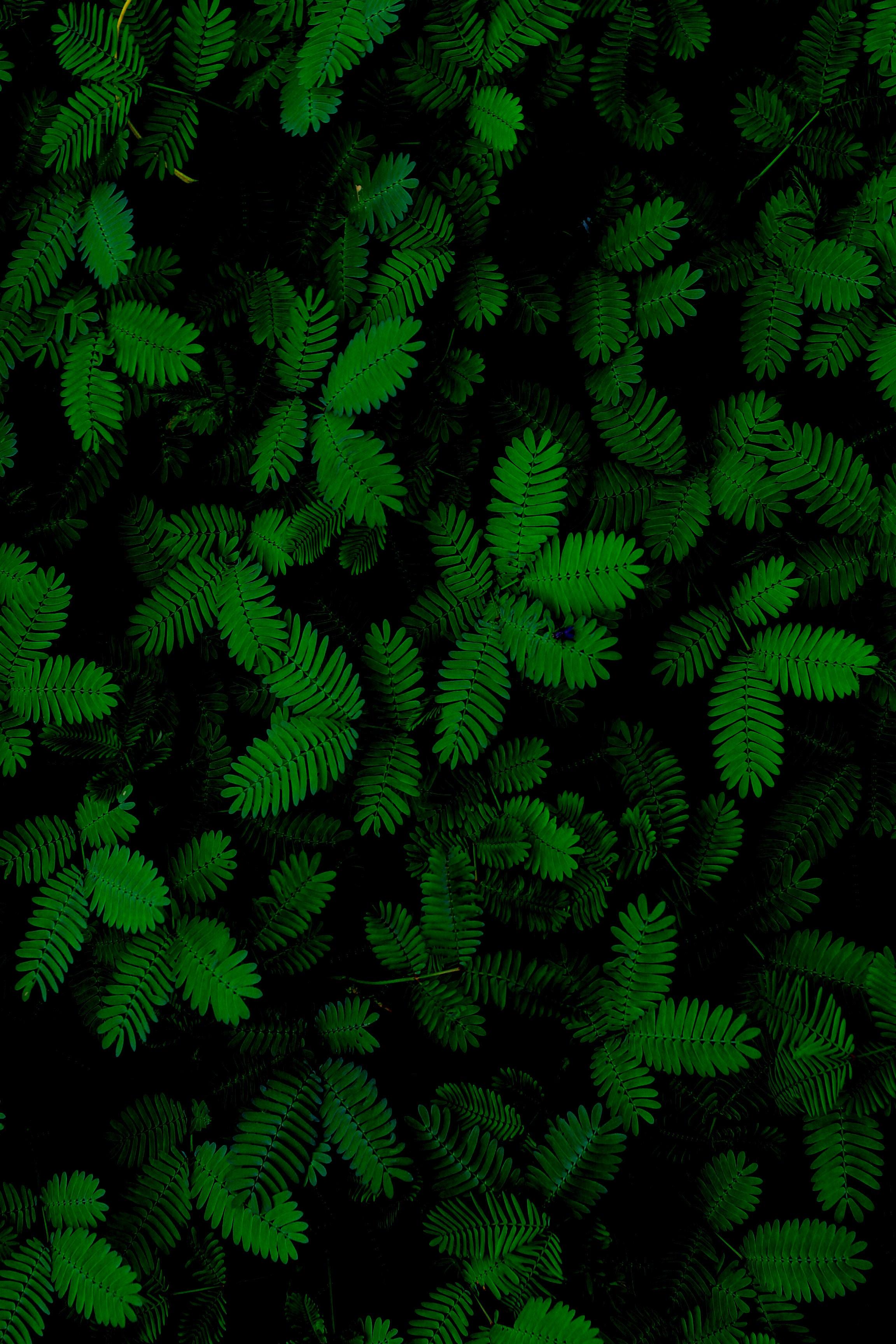 81694 завантажити Зелений шпалери на телефон безкоштовно, Рослини, Природа, Листя, Різьблений, Різьблені Зелений картинки і заставки на мобільний