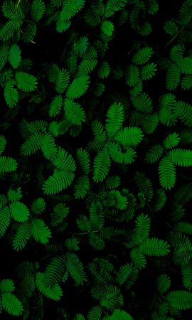 81694 download wallpaper Nature, Foliage, Plants, Carved screensavers and pictures for free