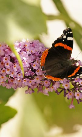 30891 Salvapantallas y fondos de pantalla Insectos en tu teléfono. Descarga imágenes de Mariposas, Insectos gratis