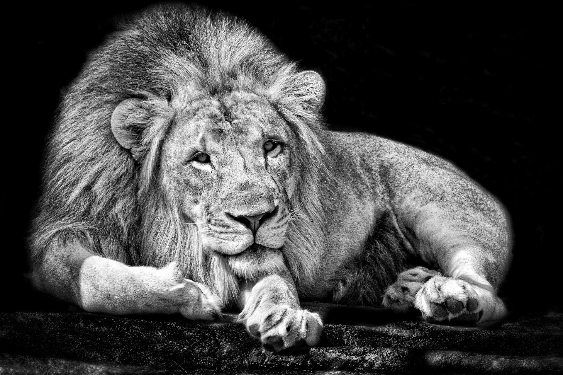 157045 скачать обои Фон, Животные, Лев, Царь - заставки и картинки бесплатно