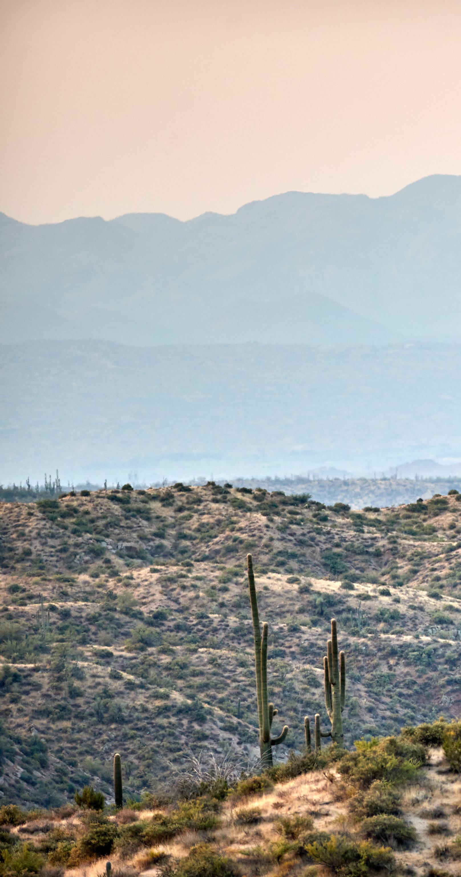 152641 descargar fondo de pantalla Naturaleza, Pradera, Las Colinas, Colinas, Hierba, Arbusto, Cactus: protectores de pantalla e imágenes gratis