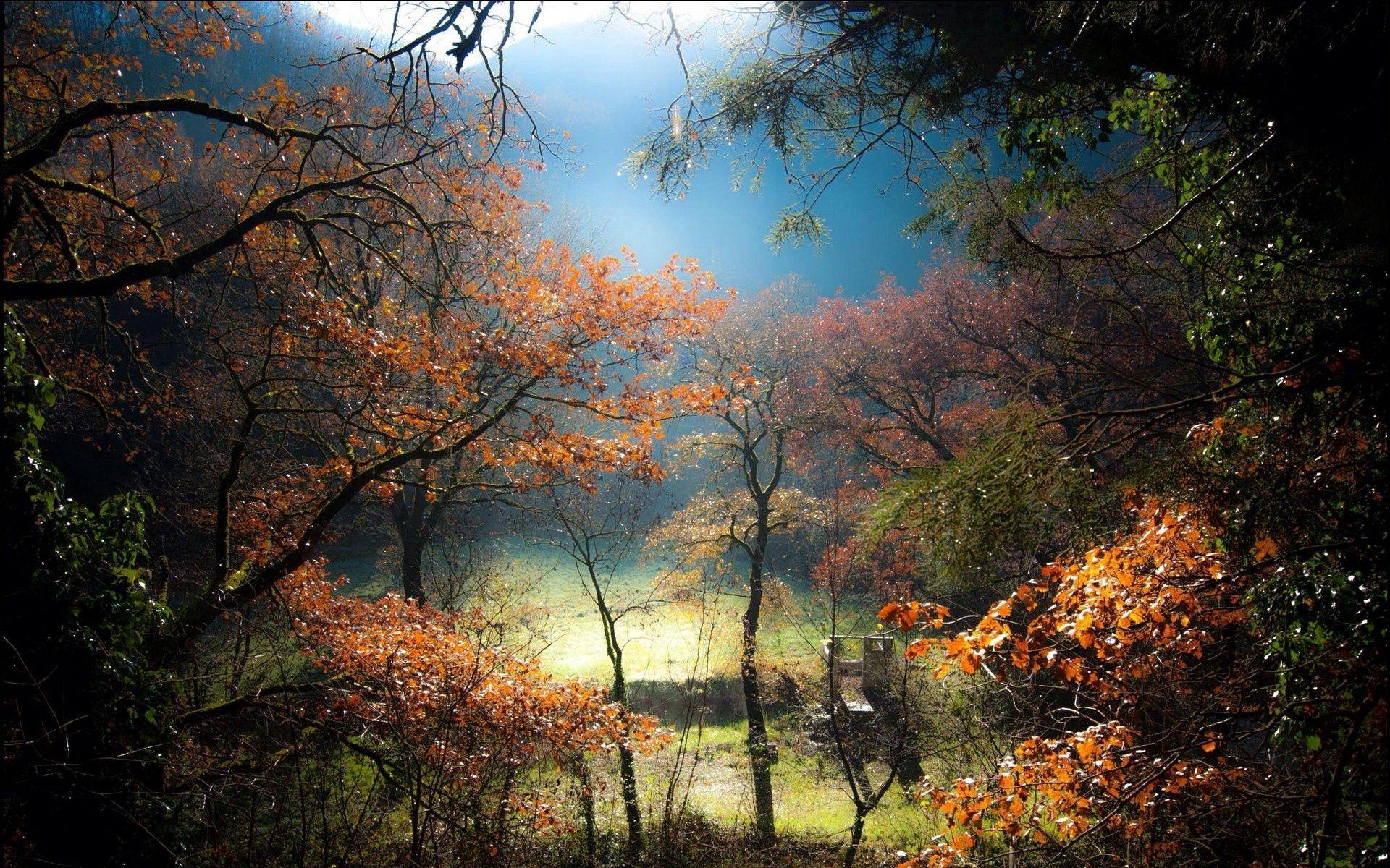 98754 скачать обои Газон, Лес, Деревья, Природа, Туман, Восход, Холм - заставки и картинки бесплатно