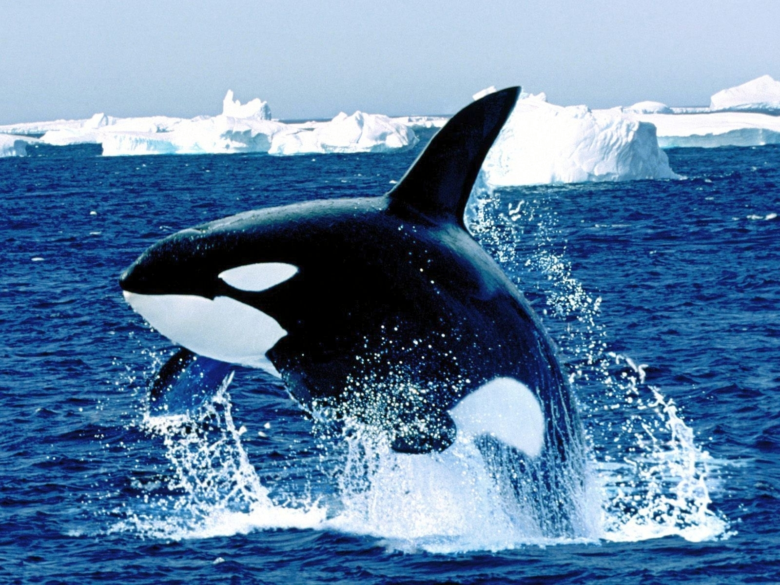 7610 download wallpaper Animals, Sea, Fishes screensavers and pictures for free