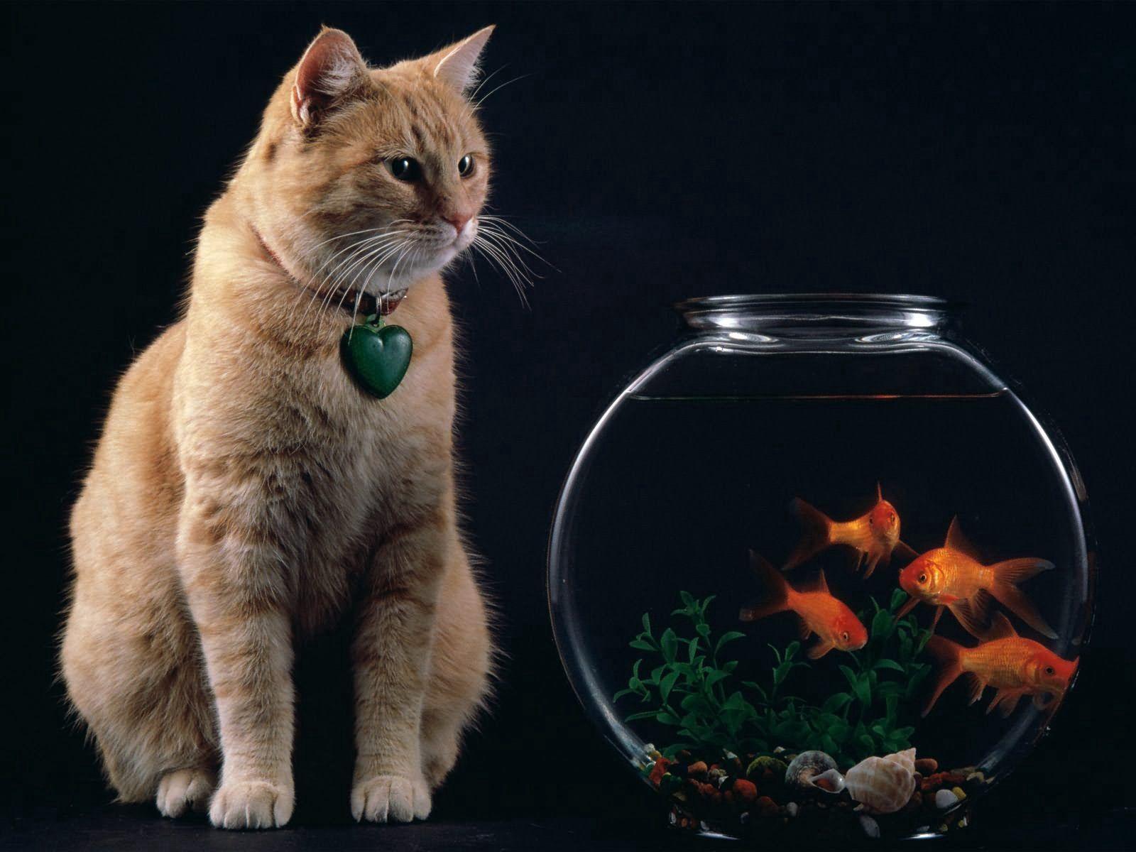 96559 Screensavers and Wallpapers Aquarium for phone. Download Animals, Cat, Aquarium, Fish pictures for free