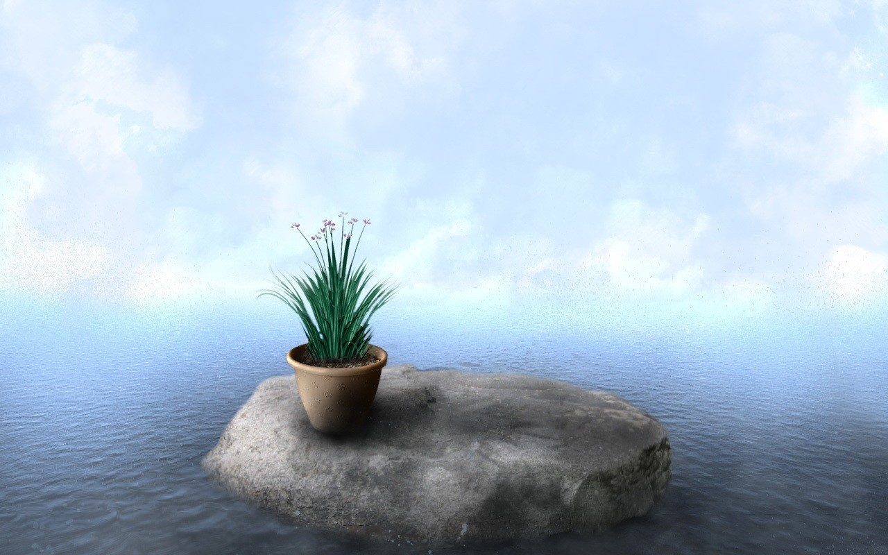 20572 download wallpaper Plants, Flowers, Stones, Sea, Pictures screensavers and pictures for free