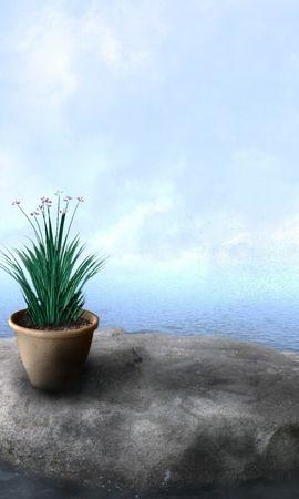 20572 скачать обои Растения, Цветы, Камни, Море, Рисунки - заставки и картинки бесплатно