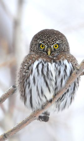 149524 download wallpaper Animals, Owl, Branch, Winter, Bird screensavers and pictures for free