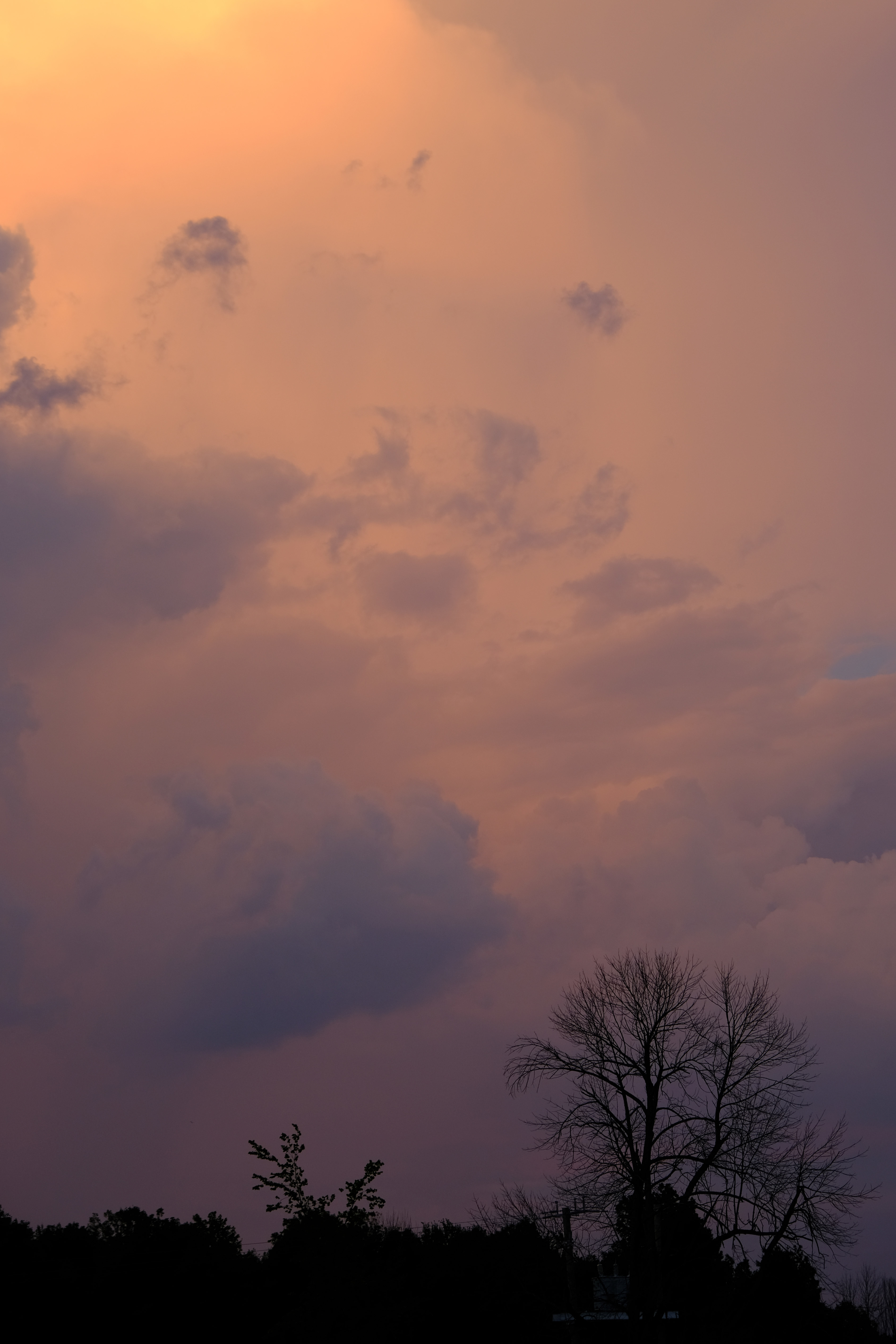 105735 download wallpaper Nature, Trees, Sky, Dusk, Twilight, Bush screensavers and pictures for free