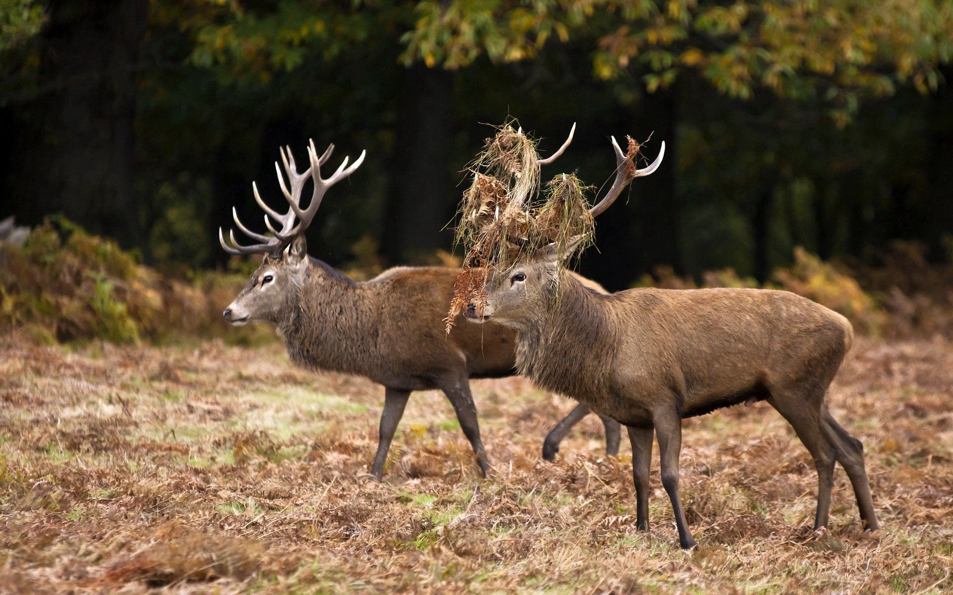 104798 download wallpaper Animals, Deers, Couple, Pair, Grass, Forest, Family screensavers and pictures for free