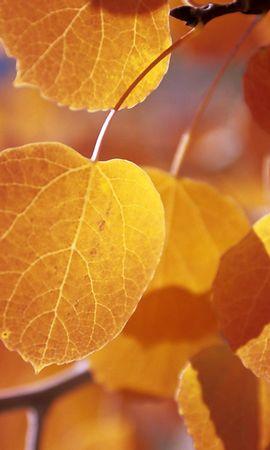 204 скачать обои Растения, Деревья, Осень, Листья - заставки и картинки бесплатно