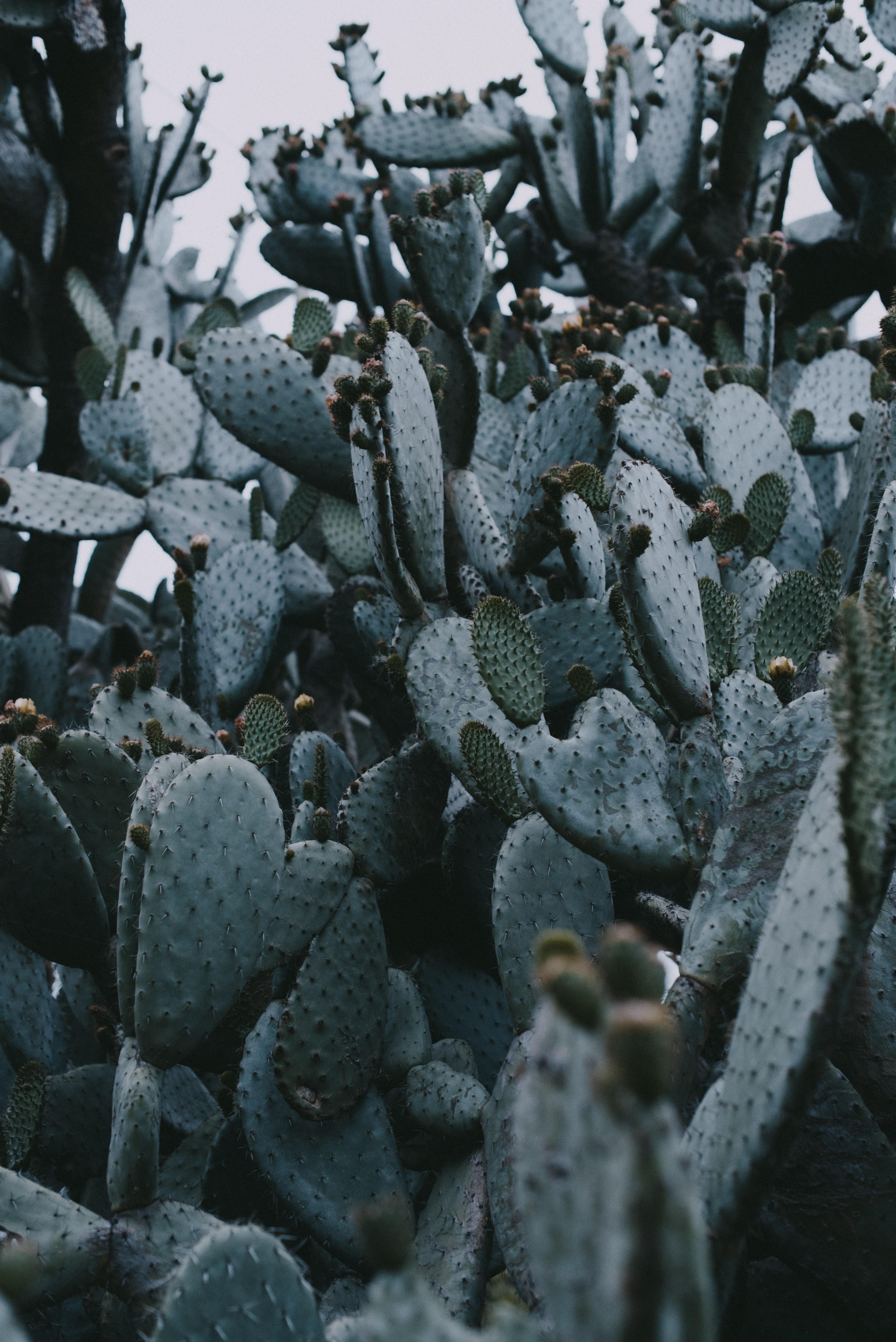143460 descargar fondo de pantalla Naturaleza, Cactus, Cacto, Aguja, Planta, Espinas: protectores de pantalla e imágenes gratis