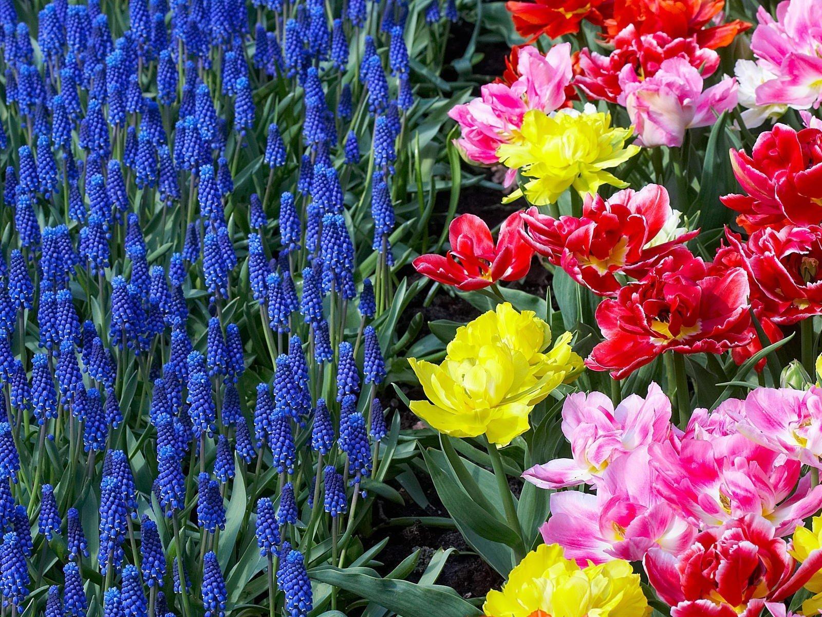 6316 скачать обои Растения, Цветы - заставки и картинки бесплатно