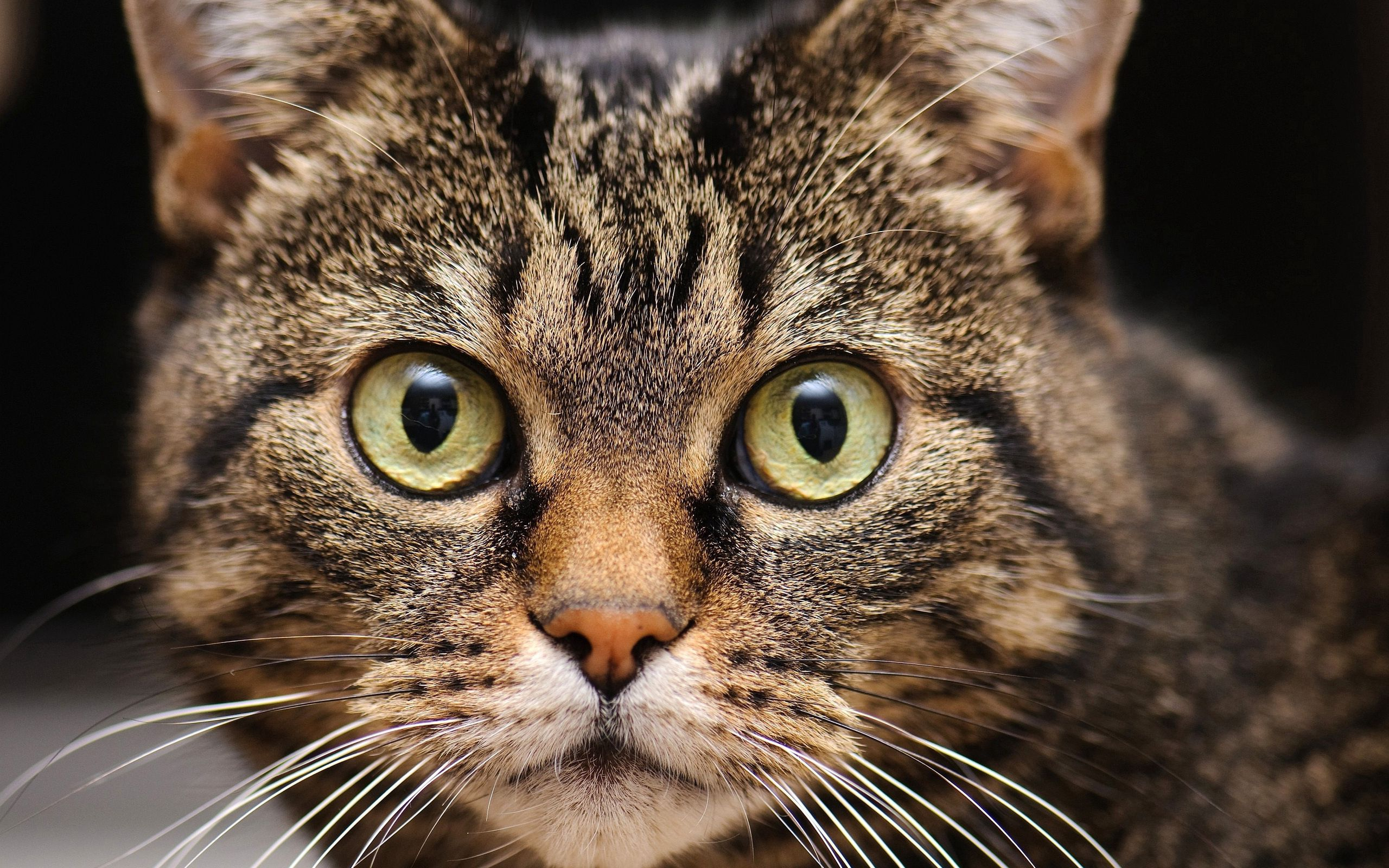 82808 download wallpaper Animals, Muzzle, Cat, Mustache, Moustache, Eyes, Sight, Opinion screensavers and pictures for free