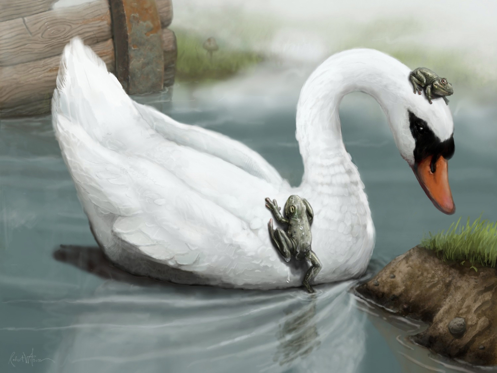 6607 download wallpaper Animals, Birds, Swans, Pictures screensavers and pictures for free