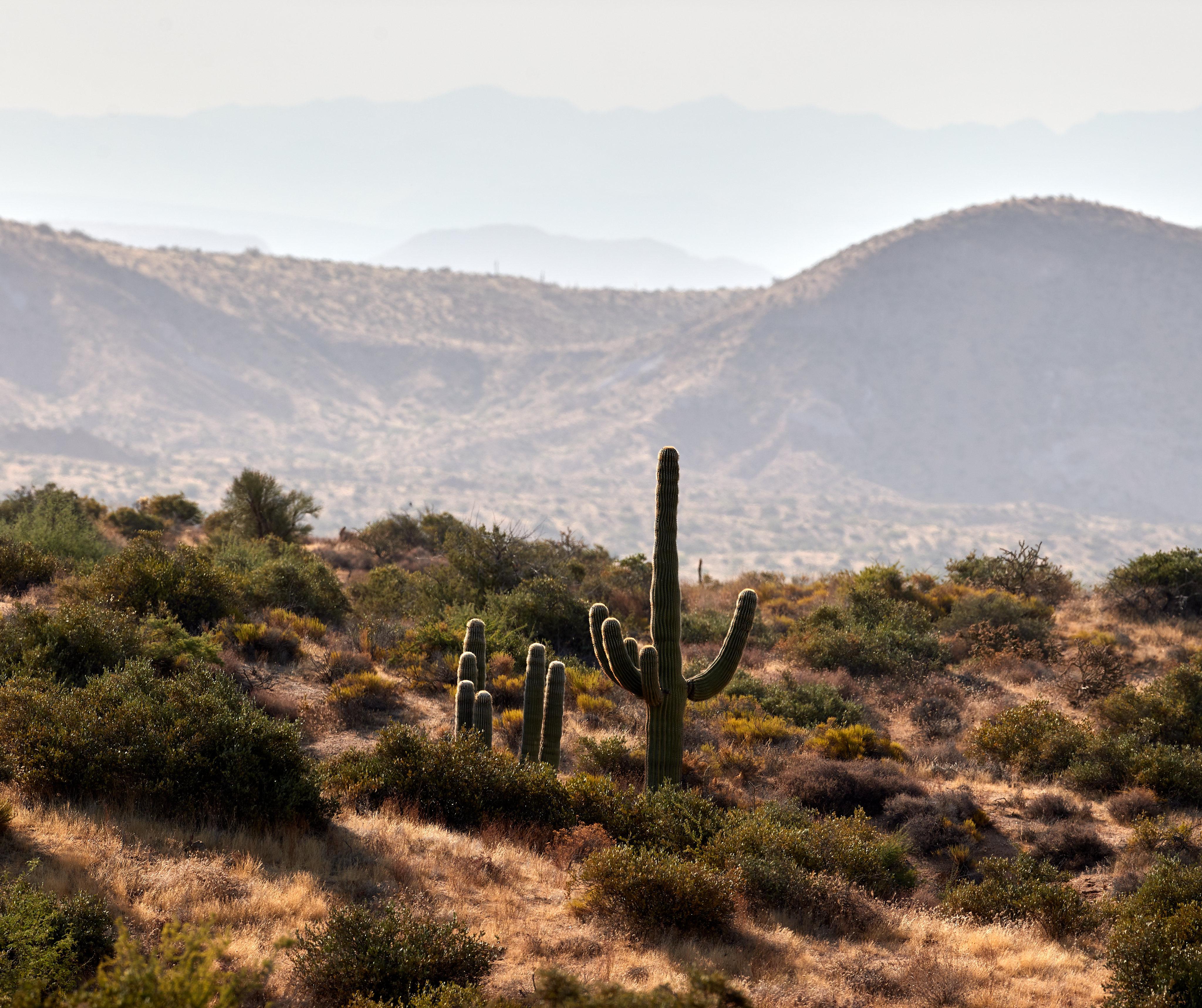 140341 descargar fondo de pantalla Naturaleza, Cactus, Cacto, Pradera, Las Colinas, Colinas, Dahl, Distancia, Arbusto: protectores de pantalla e imágenes gratis