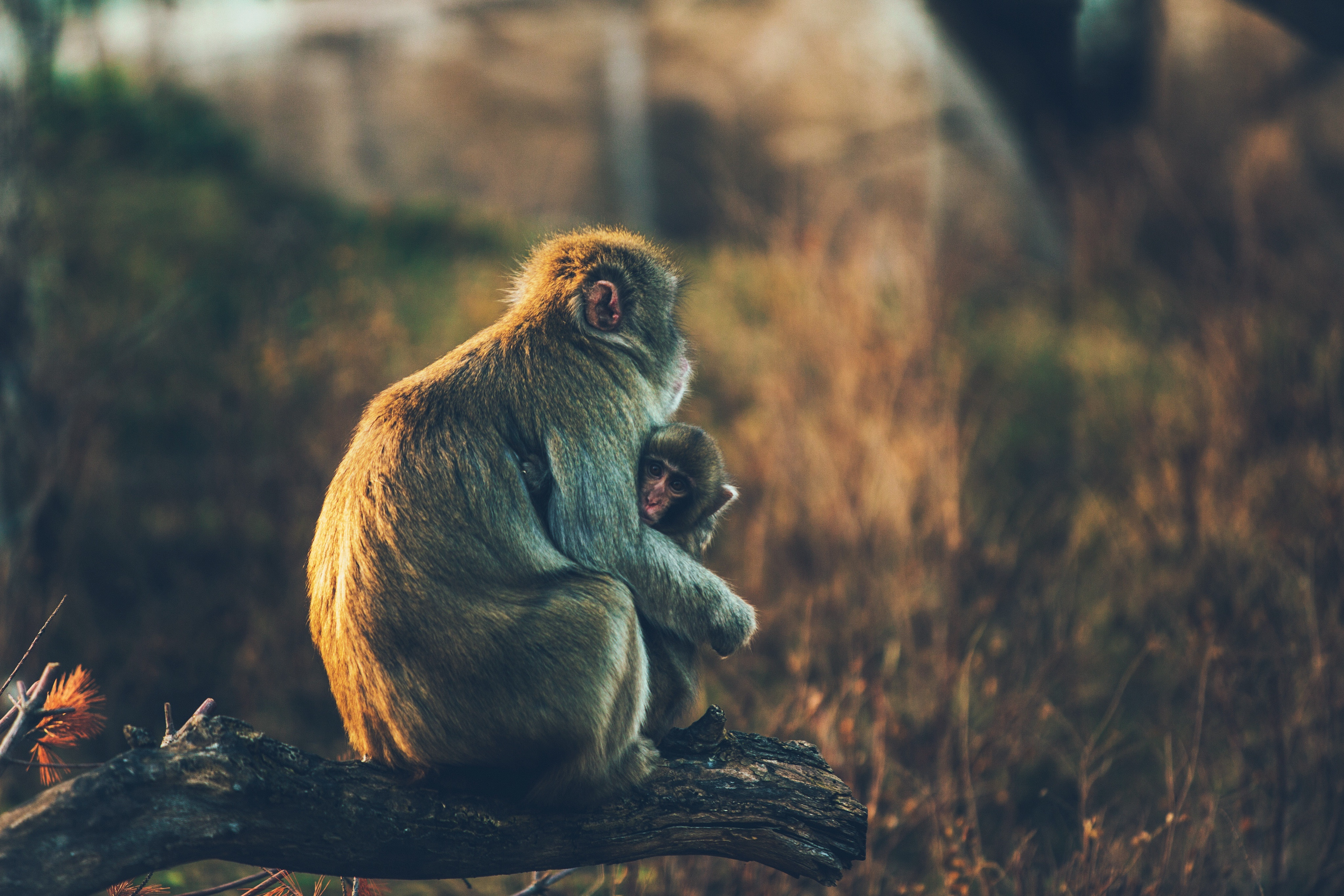 110331 Screensavers and Wallpapers Monkeys for phone. Download Animals, Monkeys, Young, Care, Joey pictures for free