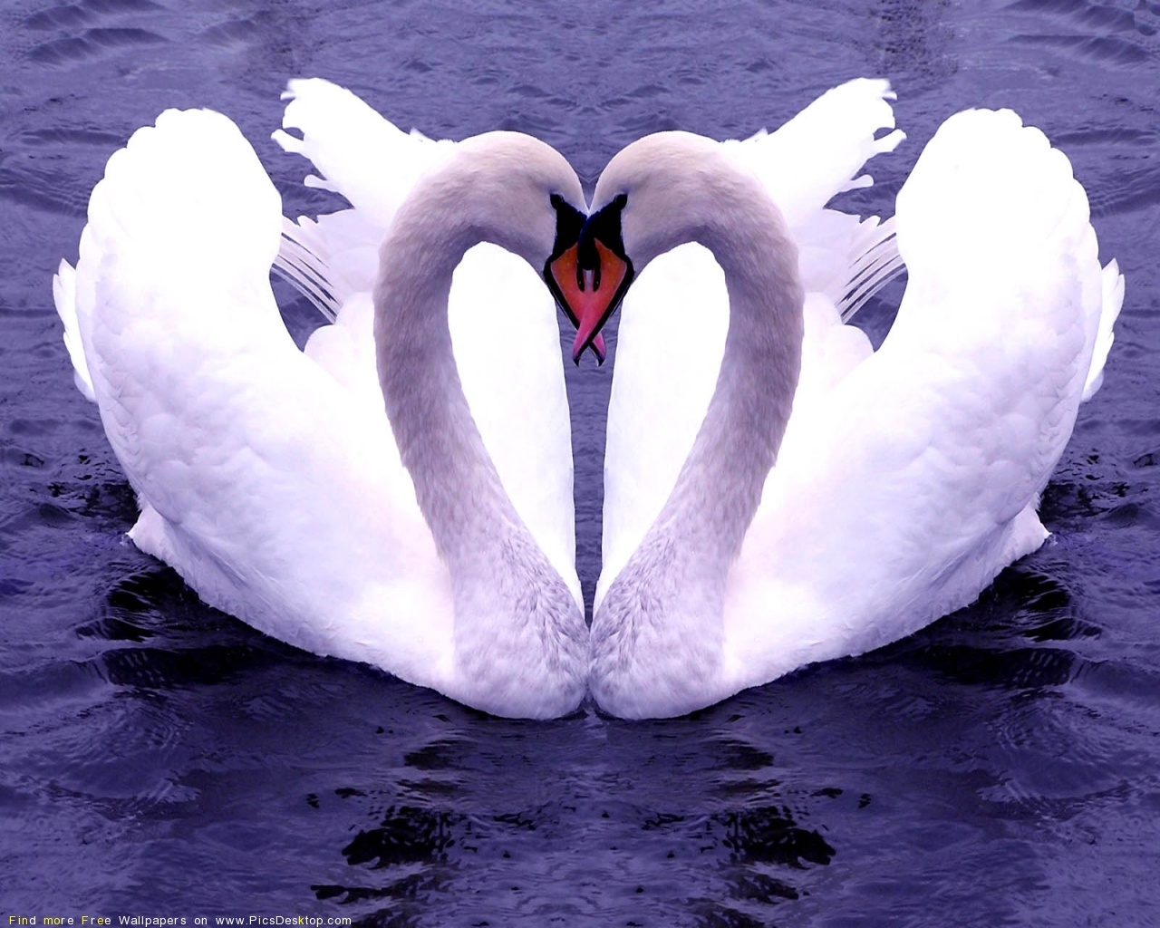 617 download wallpaper Animals, Birds, Hearts, Swans, Love, Valentine's Day screensavers and pictures for free