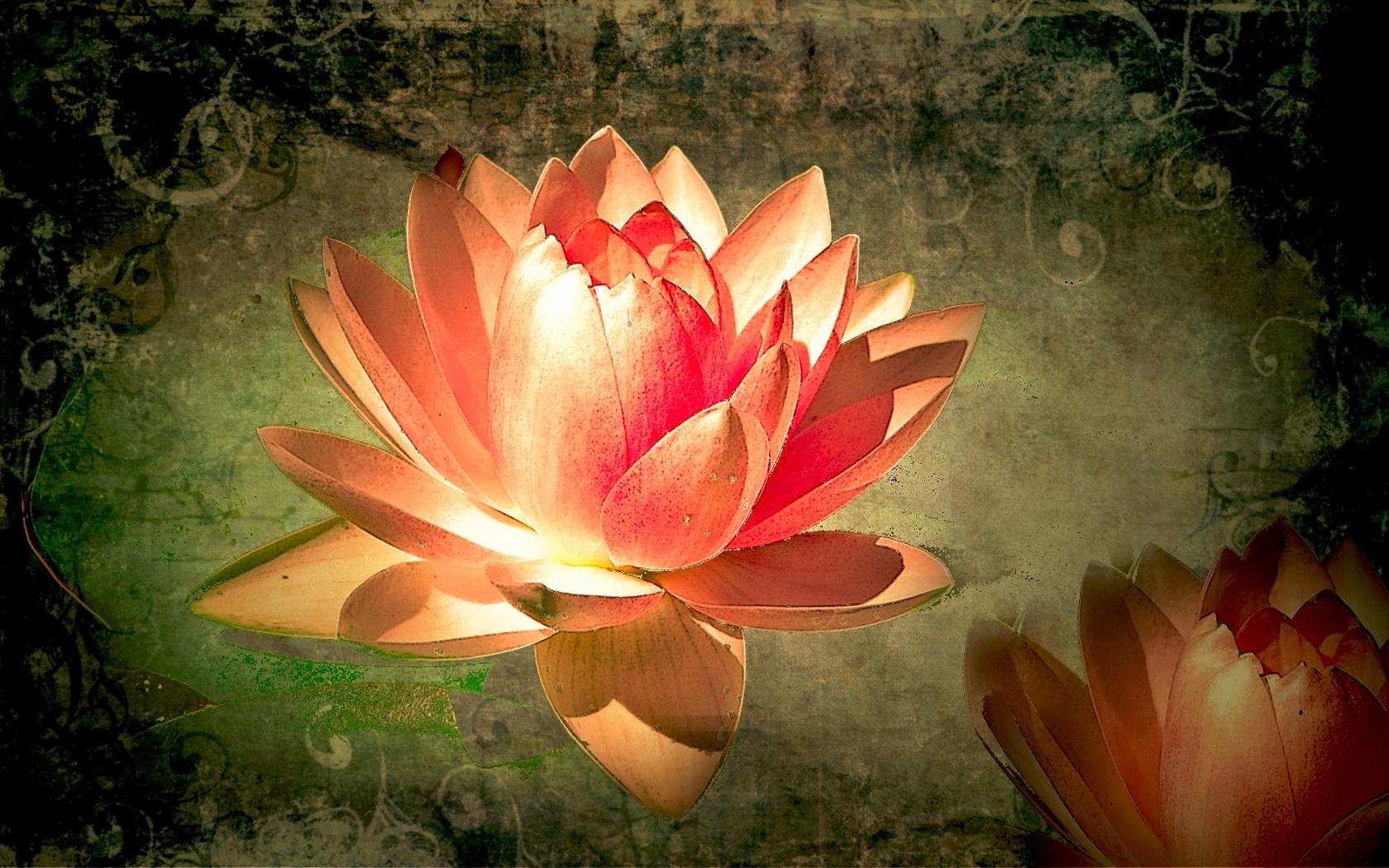 3272 скачать обои Растения, Цветы, Лилии - заставки и картинки бесплатно