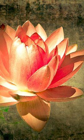 3272 descargar fondo de pantalla Plantas, Flores, Lirios: protectores de pantalla e imágenes gratis