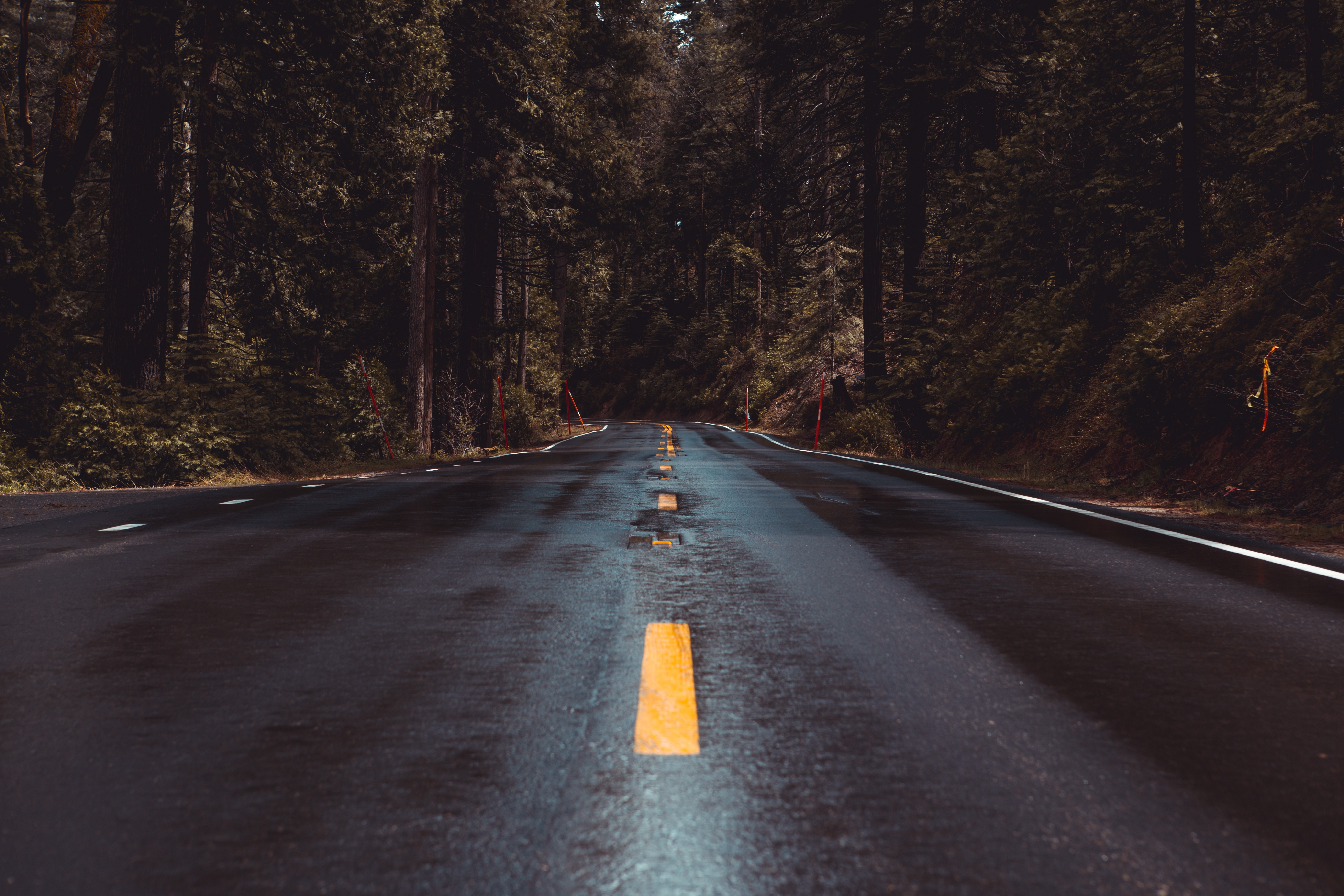 121003 Screensavers and Wallpapers Wet for phone. Download Nature, Road, Turn, Markup, Forest, Wet, Asphalt pictures for free