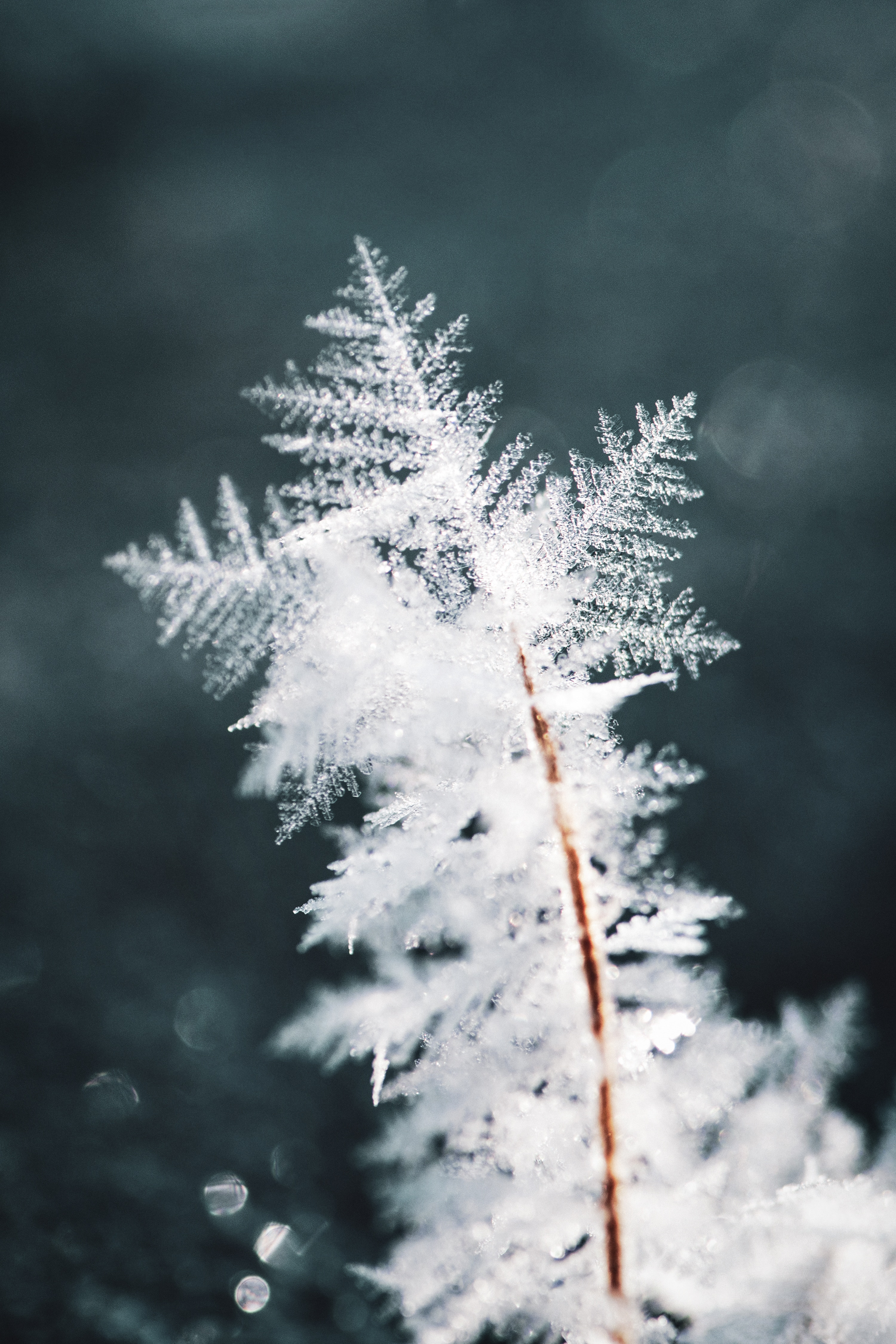 77248 download wallpaper Ice, Snow, Macro, Pattern, Snowflake screensavers and pictures for free