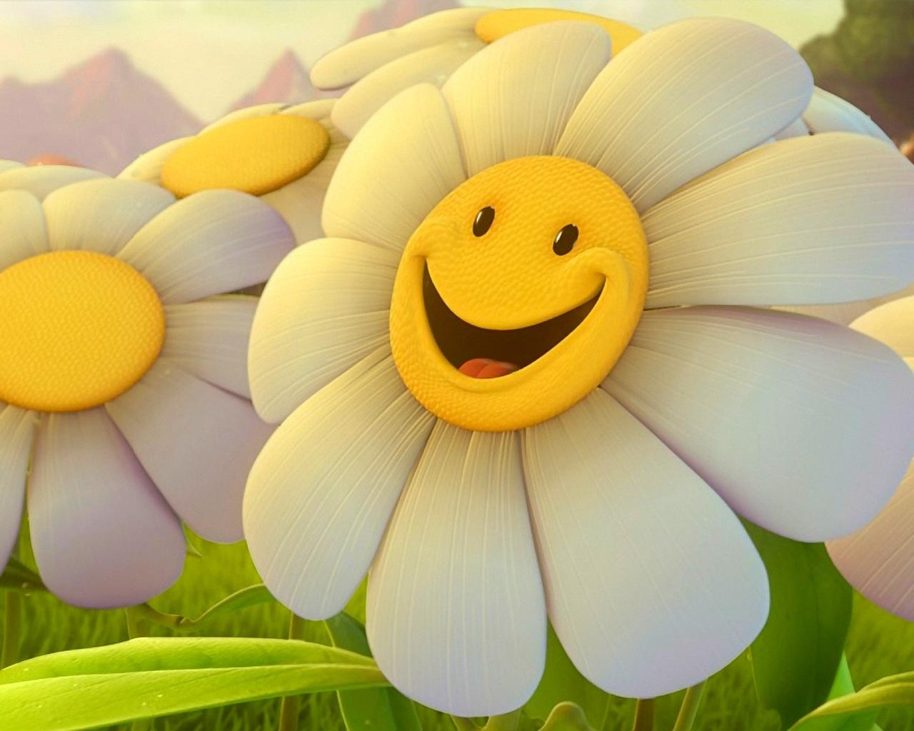 1677 Hintergrundbild herunterladen Blumen, Pflanzen, Kamille, Humor - Bildschirmschoner und Bilder kostenlos