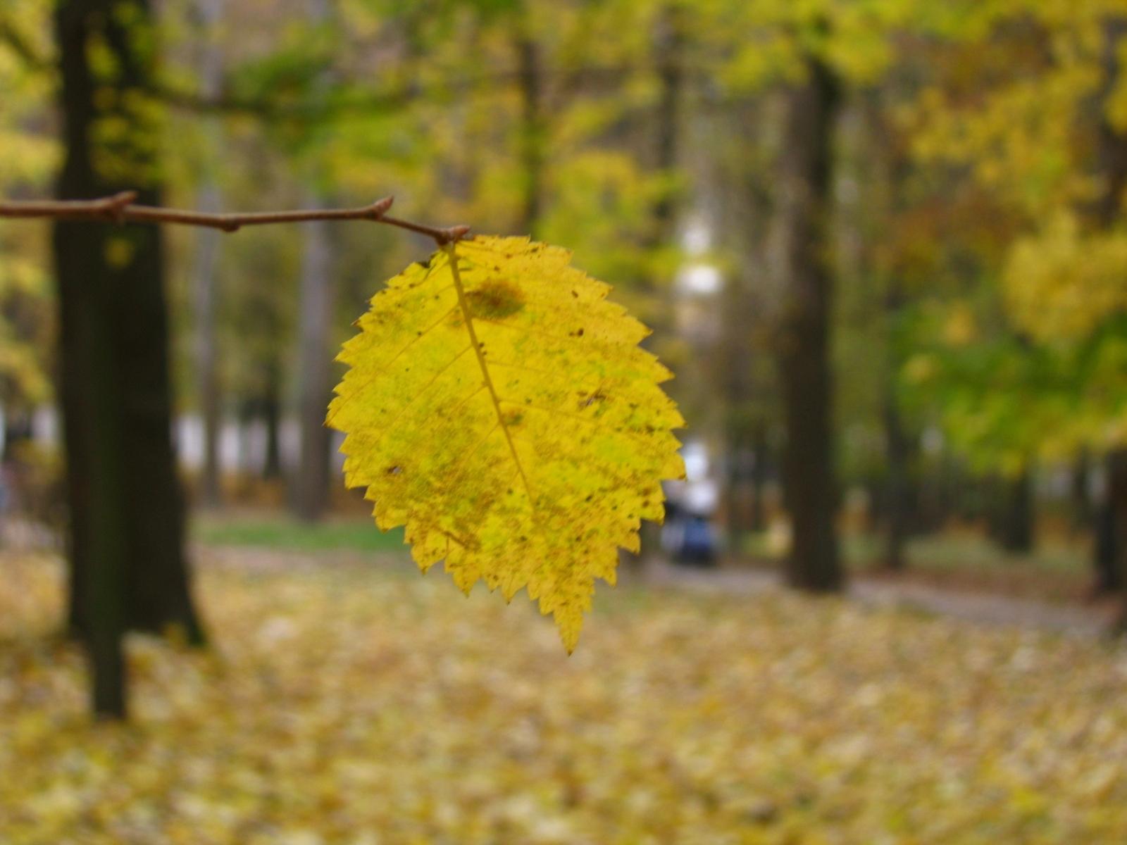 1407 скачать обои Растения, Листья - заставки и картинки бесплатно