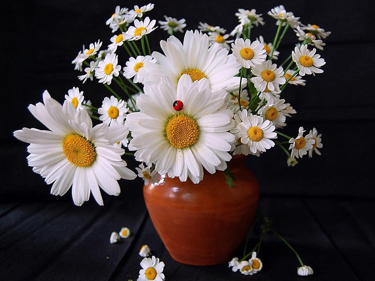 40226 завантажити шпалери Квіти, Рослини, Букети - заставки і картинки безкоштовно