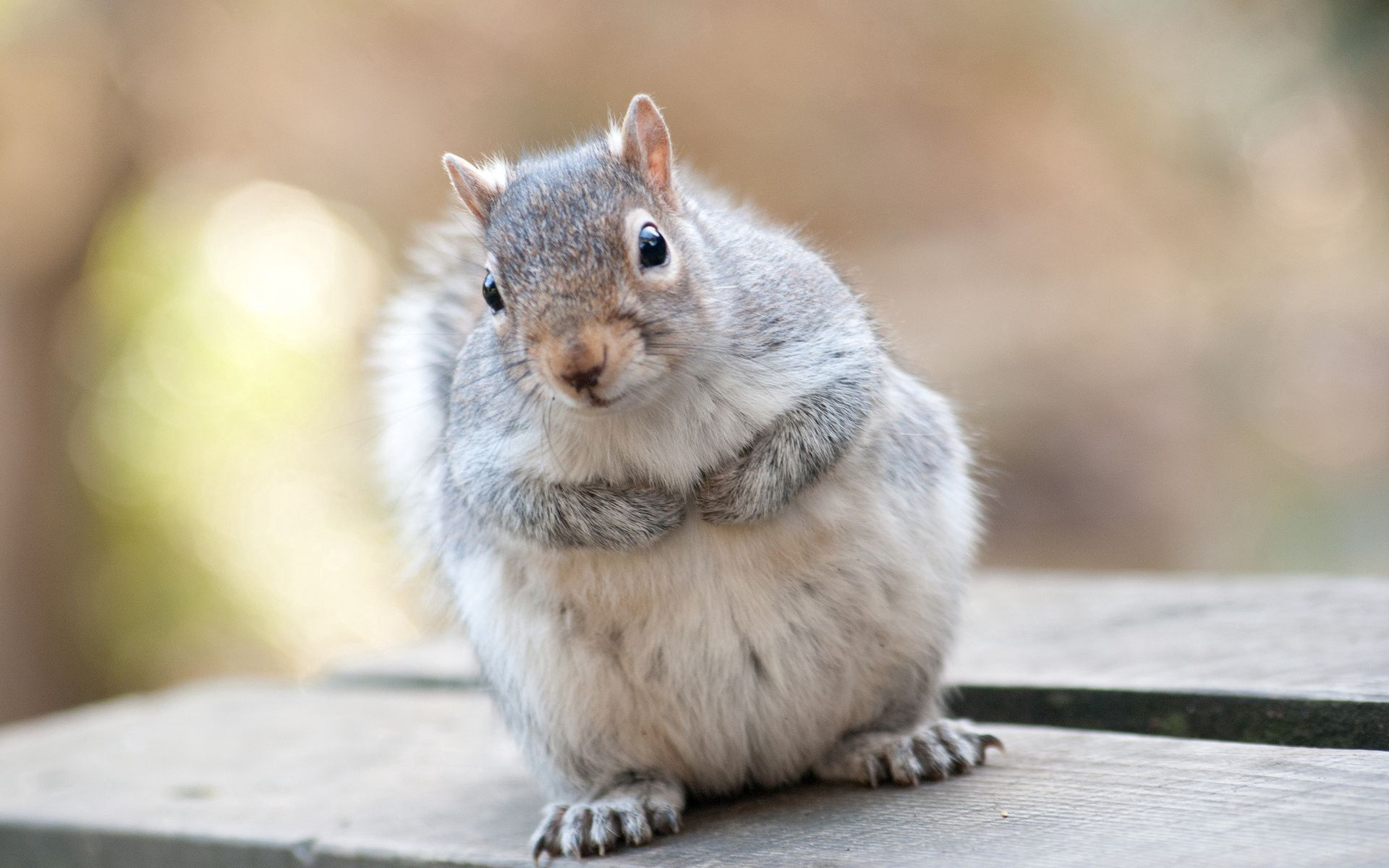 112000 Screensavers and Wallpapers Beautiful for phone. Download Animals, Squirrel, Beautiful, Grey, Animal pictures for free