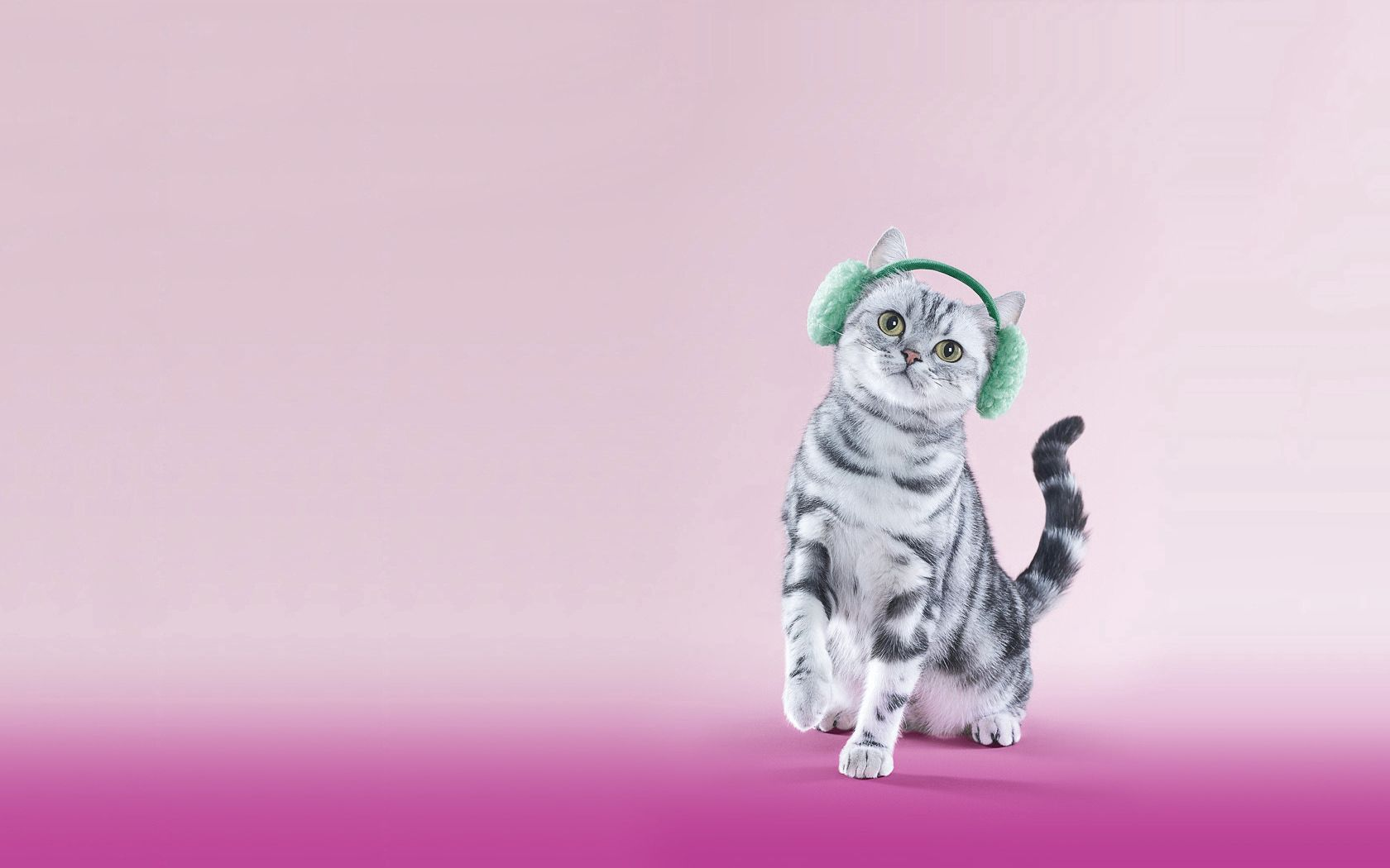 86337 download wallpaper Animals, Cat, Headphones, Lilac, Funny screensavers and pictures for free
