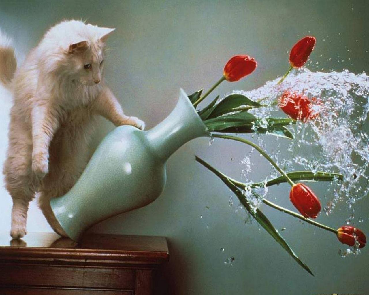 1890 скачать обои Животные, Кошки (Коты, Котики), Цветы, Тюльпаны - заставки и картинки бесплатно