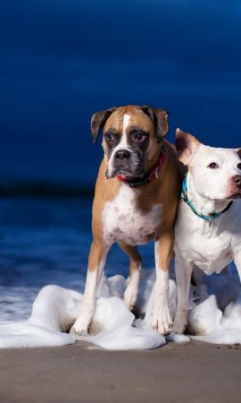 19256 download wallpaper Animals, Dogs, Sea screensavers and pictures for free