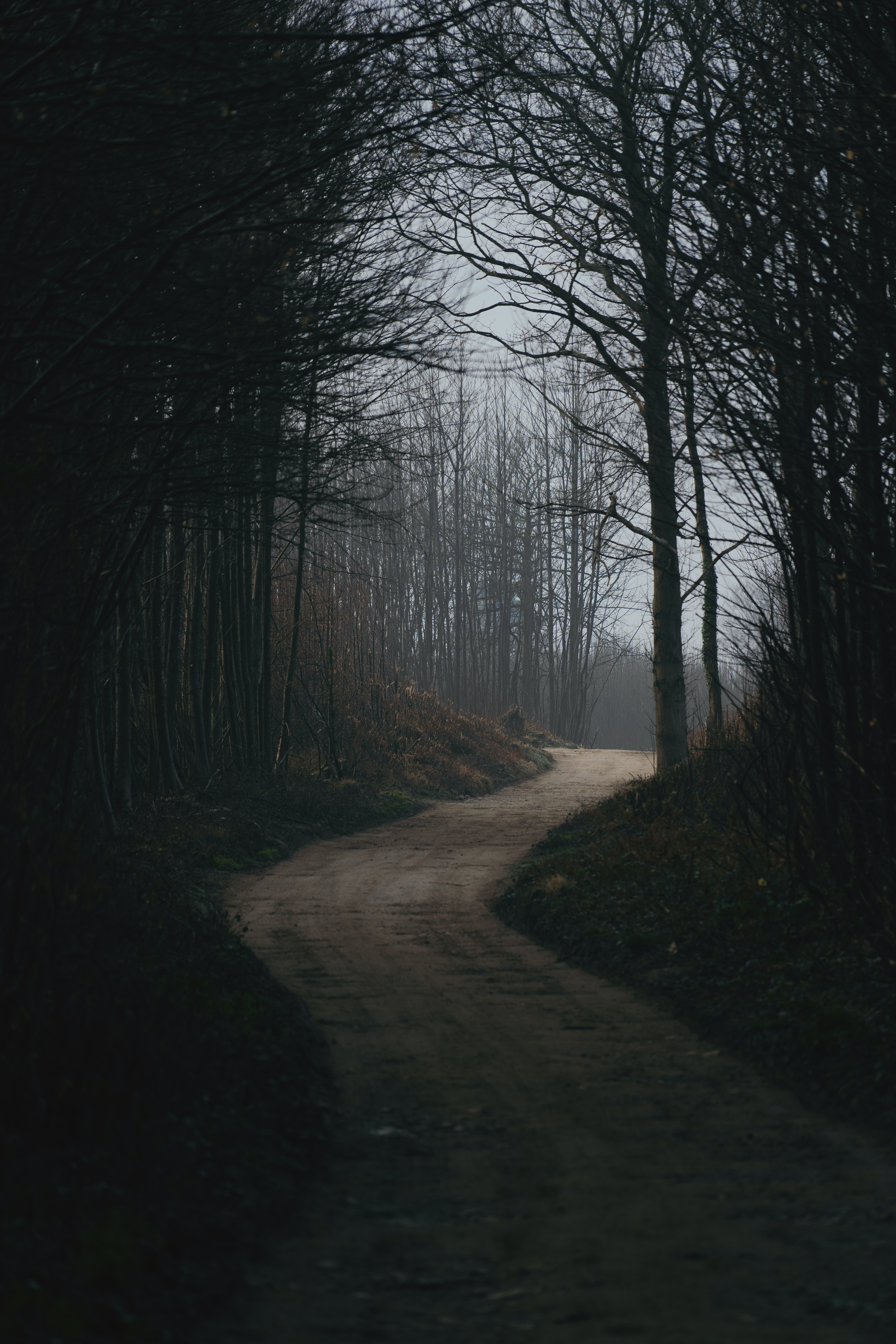 146812 Screensavers and Wallpapers Nature for phone. Download Nature, Forest, Trees, Road, Turn, Dark pictures for free