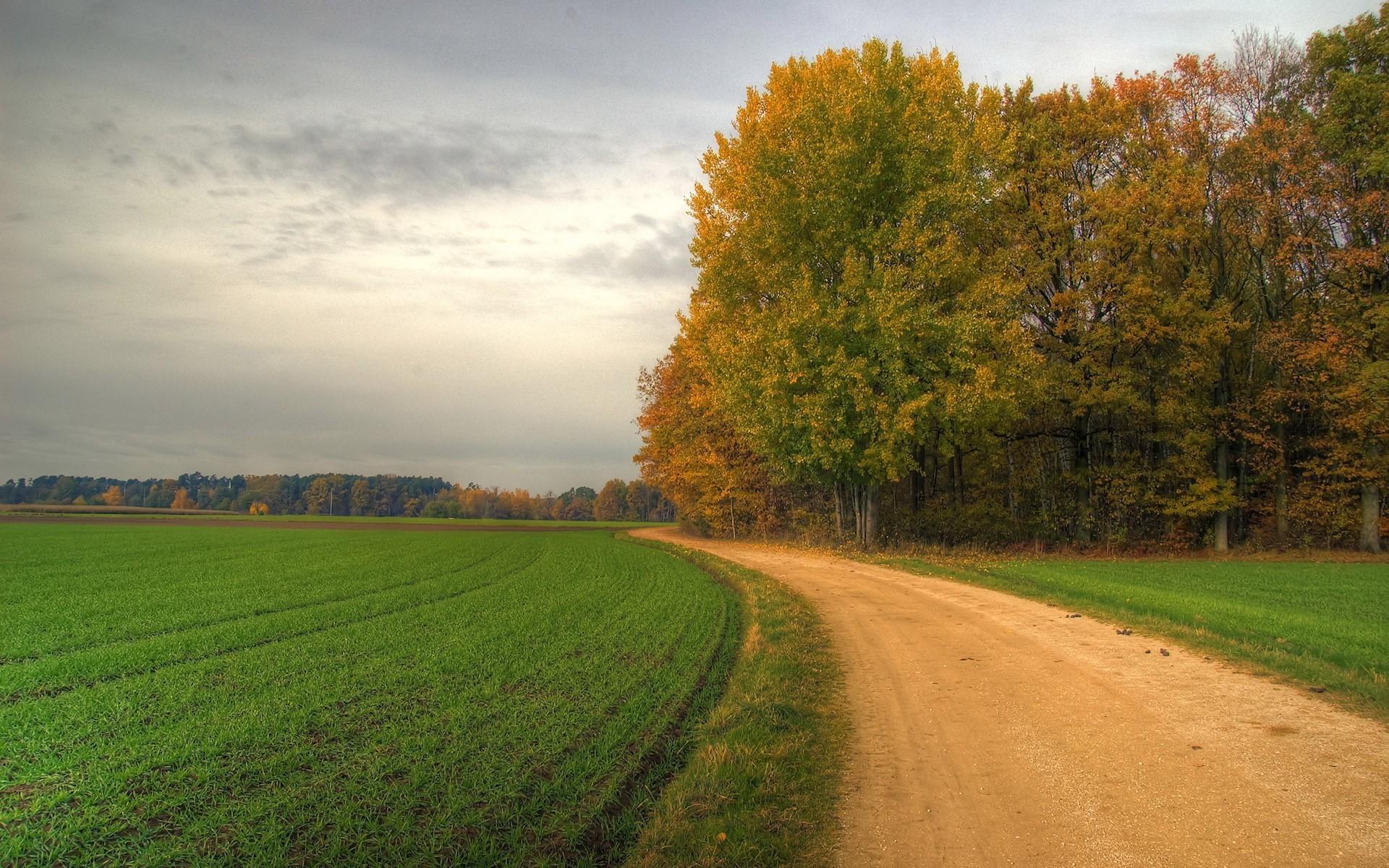 20700 скачать обои Пейзаж, Деревья, Поля, Дороги - заставки и картинки бесплатно